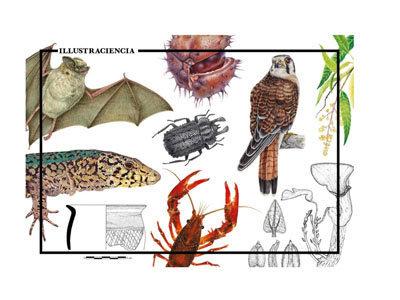 Международный Конкурс научного рисунка Illustraciència