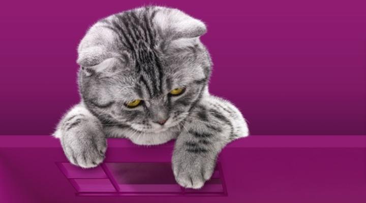 Акция Whiskas «День кошек 2020»